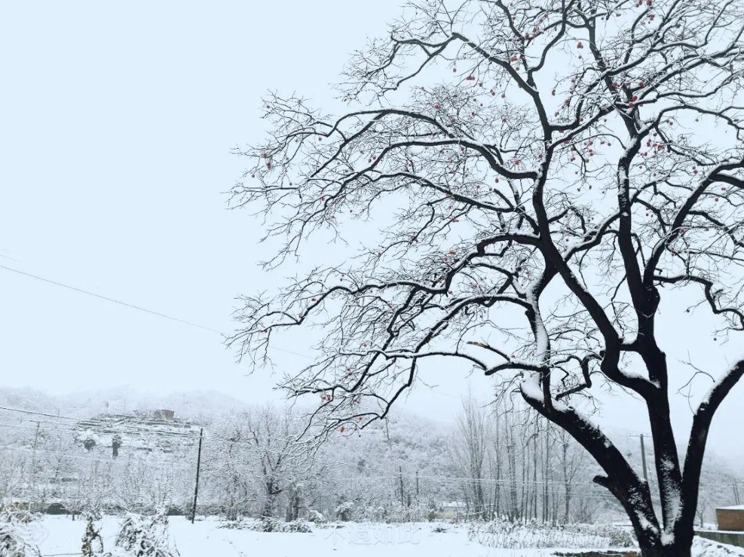 战风雪,斗严寒!成蜀电力冒雪奋进促工期